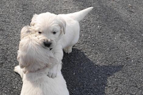 puppy fun